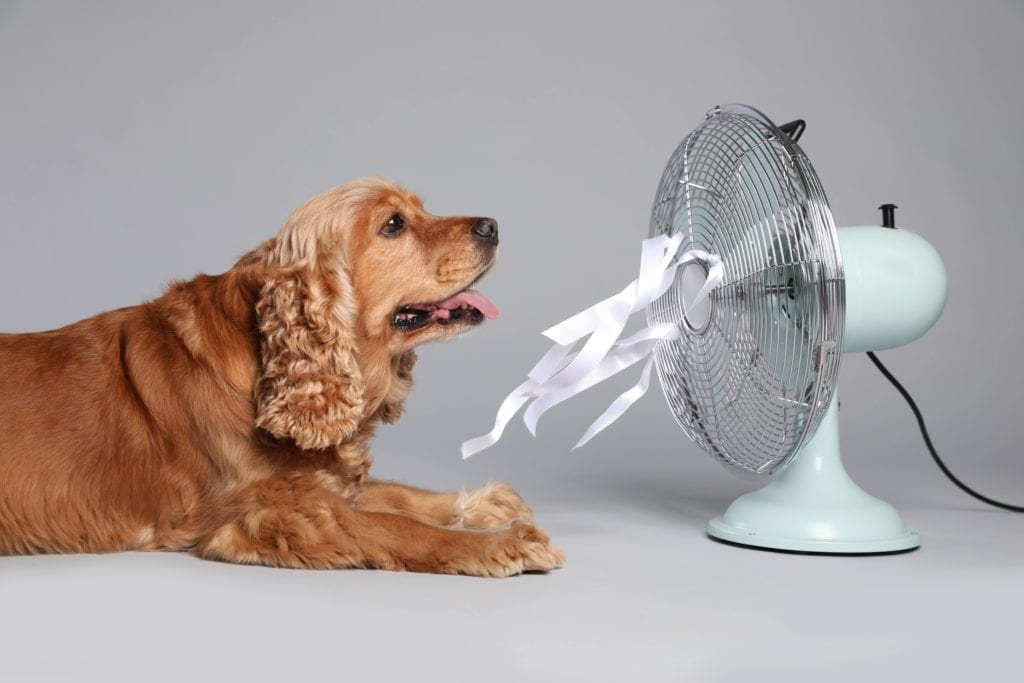 dog wants ac replacement